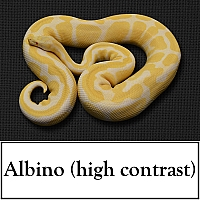 albino-(high-contrast)