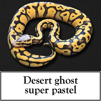 desert-ghost-super-pastel