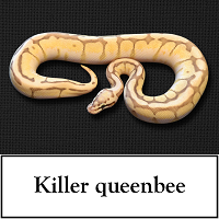 killer-queenbee