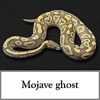 mojave-ghost