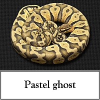 pastel-ghost
