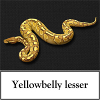 yellowbelly-lesser